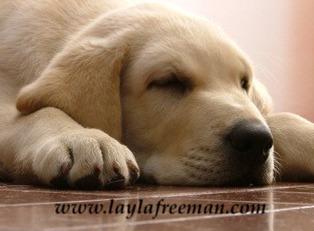 puppy-sleep-own_0